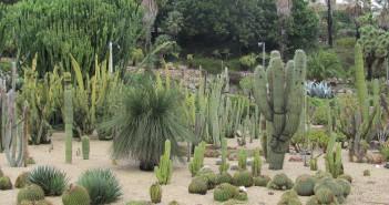 barcelona-cactus-park