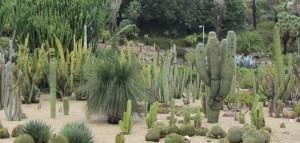 BCNConnect - Cactus Park
