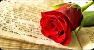 BCNConnect - Sant Jordi Rose and Book