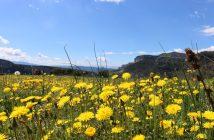 Natural Park of Collsacabra