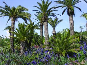 PARKS botanic