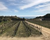 AiBarcelona: local wines and slow food experience