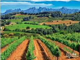Penedès winery